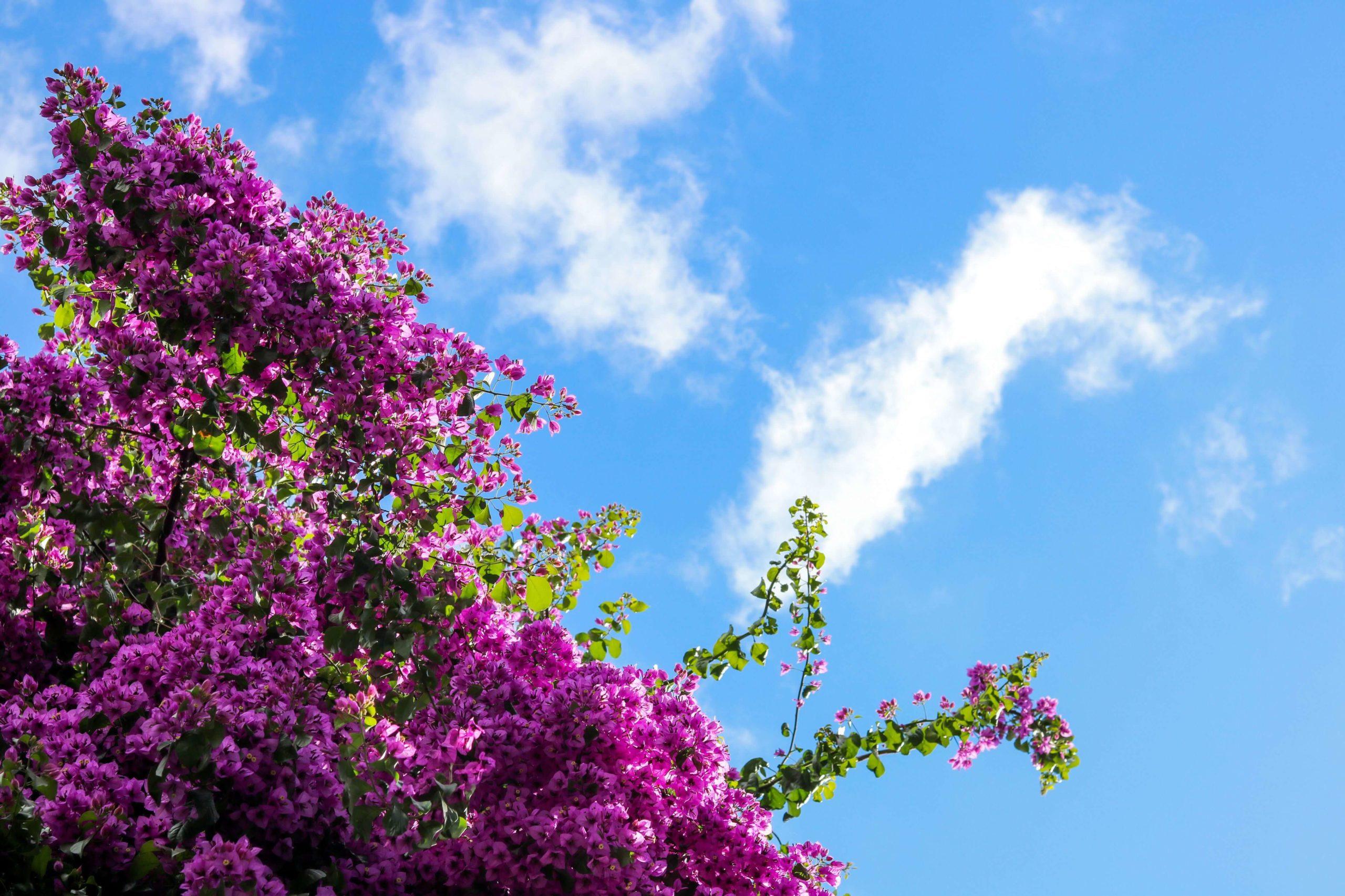 marzo fioritura e cielo