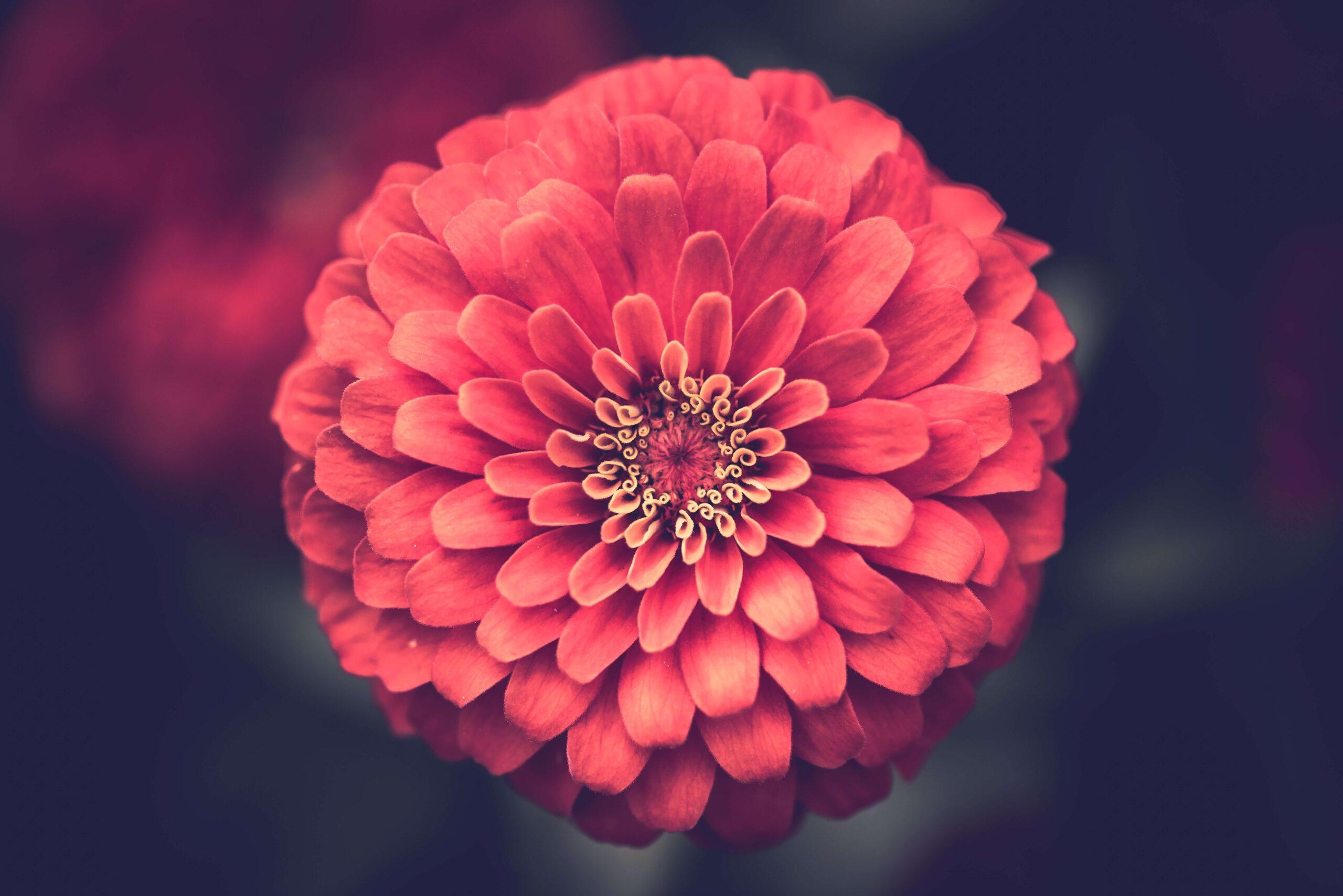 fiore festa della mamma